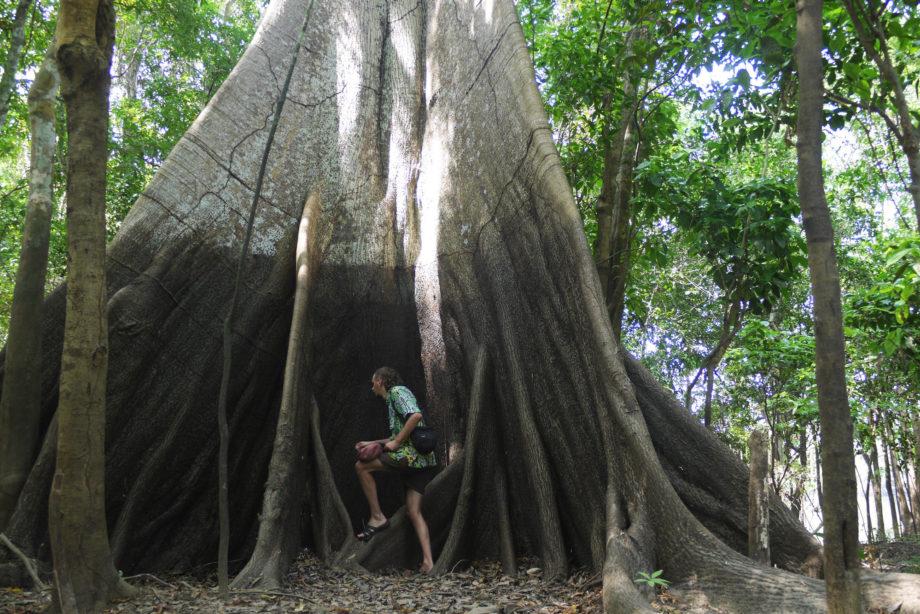 Bill Cutbill Amazon Tree