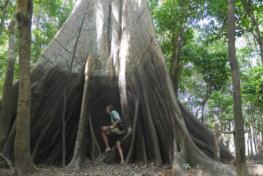 Bill cutbill jungle 2